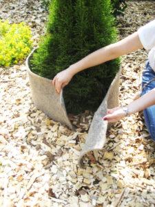 proteger ses plantes du froid