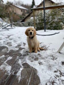 chouchouter son chien en hiver